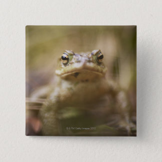 Close-up of toad 2 inch square button