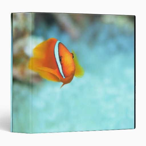 Close-up of tomato anemone fish, Okinawa, Japan Vinyl Binders