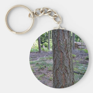 Close up of Tree Trunk in forest Keychain