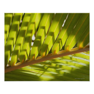 Close up of tropical palm frond poster