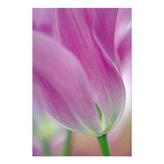 Close-up of underside of tulip flower, 2 photo print