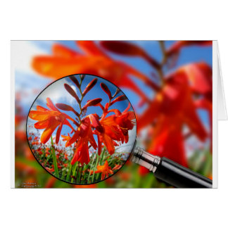 Close up of vibrant Orange flower in field with bl Card