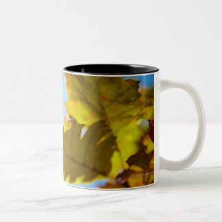 Close Up of Yellow Fall Leaves Two-Tone Coffee Mug