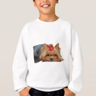 Close-up of Yorkshire terrier's muzzle Sweatshirt