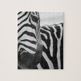 Close-up of zebra face and shoulder jigsaw puzzle