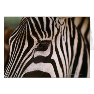 Close-up of zebra's head card