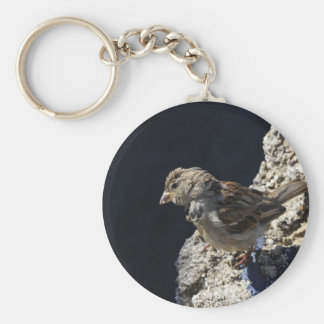 Close-up on a little sparrow on a rock basic round button keychain