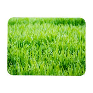 Close-up on blades of grass magnet