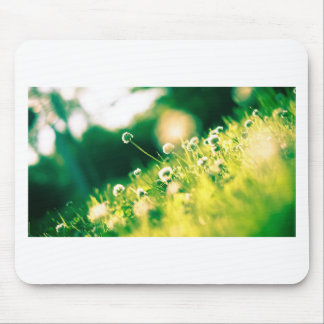 Close Up Photo of Dandelion Mouse Pad
