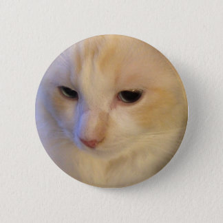 Close Up Red Point Ragdoll Cat 2 Inch Round Button