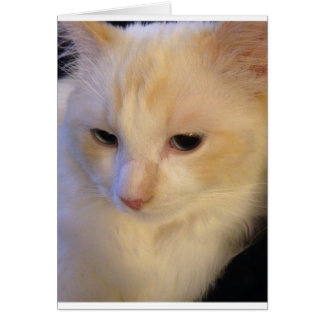 Close Up Red Point Ragdoll Cat Card