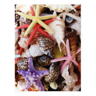 Close Up Sea Shell ans Starfish Photos Postcard