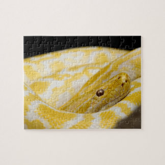 Close-up Snake Photo Jigsaw Puzzle