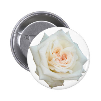 Close Up View Of A Beautiful White Rose Isolated Buttons