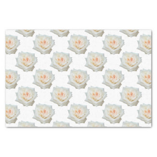 Close Up View Of A Beautiful White Rose Isolated Tissue Paper