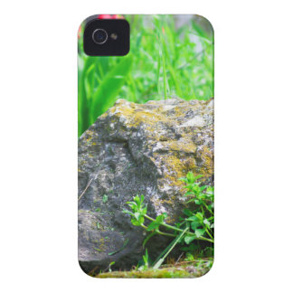 Close-up view of a decorative lawn in a park iPhone 4 cases