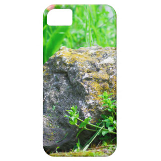 Close-up view of a decorative lawn in a park iPhone 5 case