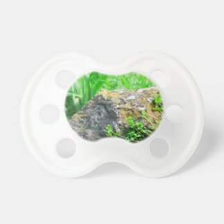 Close-up view of a decorative lawn in a park pacifier