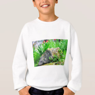 Close-up view of a decorative lawn in a park sweatshirt