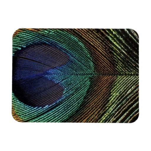 Close up view of eyespot on male peacock feather vinyl magnet