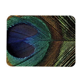 Close up view of eyespot on male peacock feather rectangular photo magnet