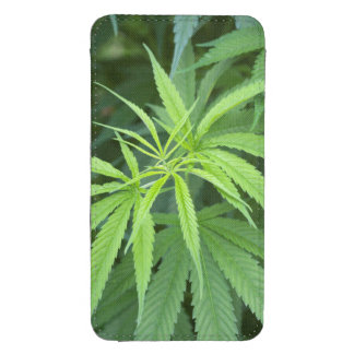 Close-Up View Of Marijuana Plant, Malkerns Galaxy S4 Pouch