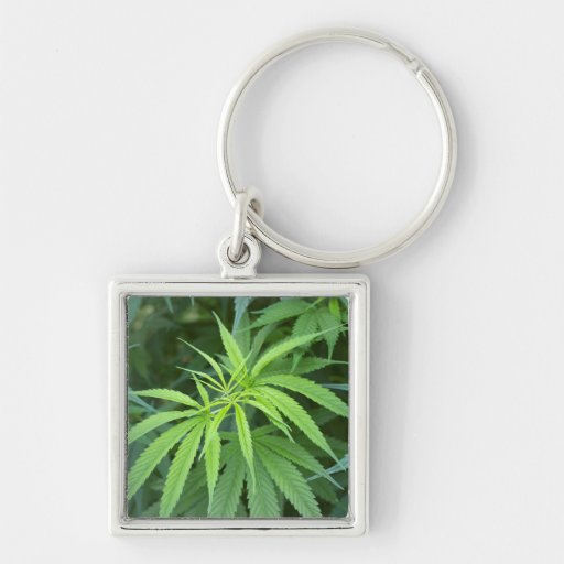 Close-Up View Of Marijuana Plant, Malkerns Keychains