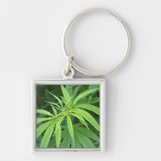 Close-Up View Of Marijuana Plant, Malkerns Key Chain