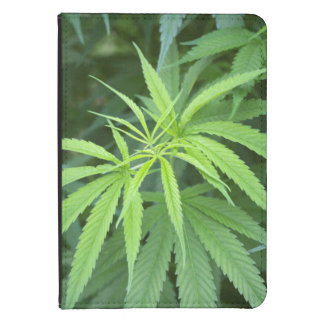 Close-Up View Of Marijuana Plant, Malkerns Kindle 4 Cover