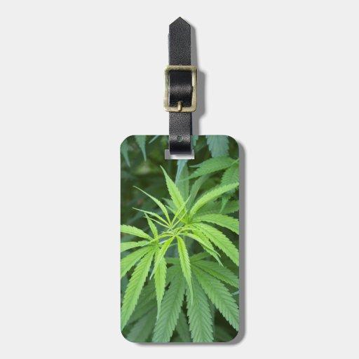 Close-Up View Of Marijuana Plant, Malkerns Bag Tag