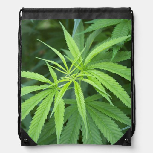 Close-Up View Of Marijuana Plant, Malkerns Drawstring Backpack