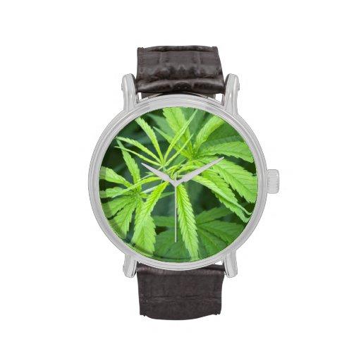 Close-Up View Of Marijuana Plant, Malkerns Wrist Watch