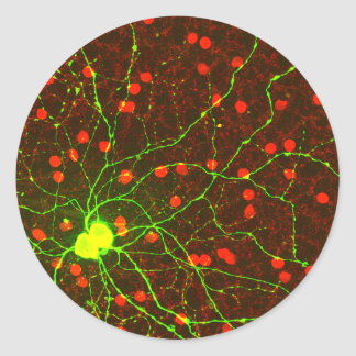 Close Up View of Retinal Ganglion Cell Classic Round Sticker