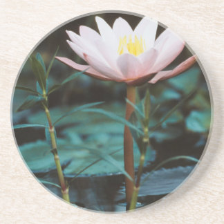 Close-Up view of Water Lily at Inle Lake Beverage Coaster