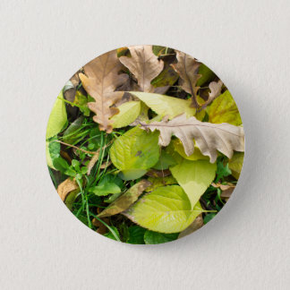 Close-up view on fallen autumn leaves 2 inch round button