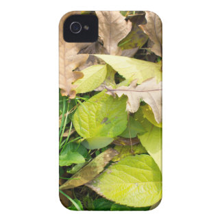 Close-up view on fallen autumn leaves iPhone 4 covers