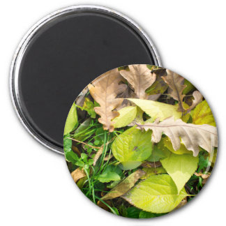 Close-up view on fallen autumn leaves magnet