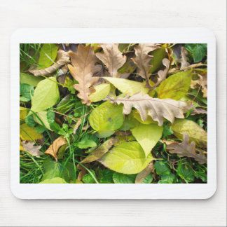 Close-up view on fallen autumn leaves mouse pad
