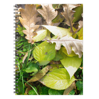 Close-up view on fallen autumn leaves notebooks