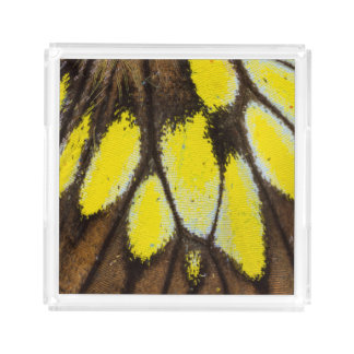 Close-up Wing Pattern of Tropical Butterfly Acrylic Tray