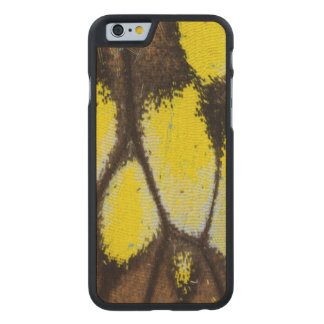 Close-up Wing Pattern of Tropical Butterfly Carved Maple iPhone 6 Case