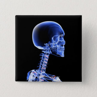 Close up x-ray of the bones in the neck 2 inch square button