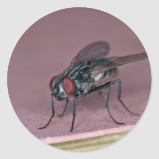 Closer view of house fly insect round sticker