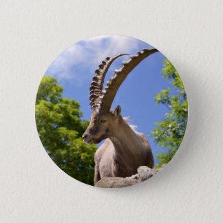 Closeup Alpine ibex 2 Inch Round Button