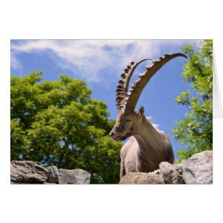 Closeup Alpine ibex Card