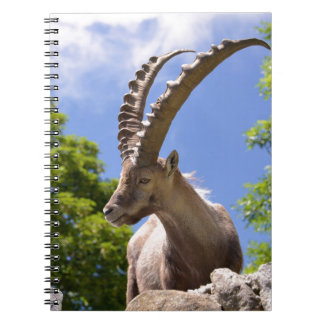Closeup Alpine ibex Notebook