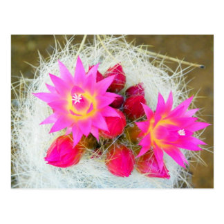 CloseUp Cacti Bloom Postcard
