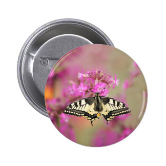Closeup dovetail butterfly on lilac flower 2 inch round button