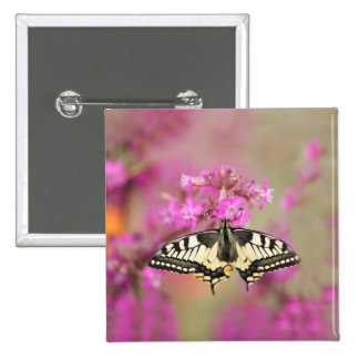 Closeup dovetail butterfly on lilac flower 2 inch square button