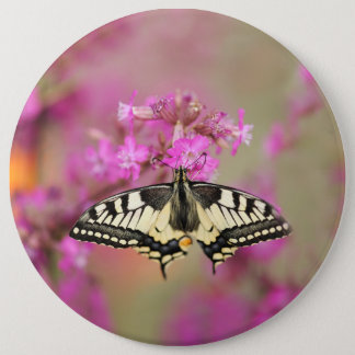 Closeup dovetail butterfly on lilac flower 6 inch round button
